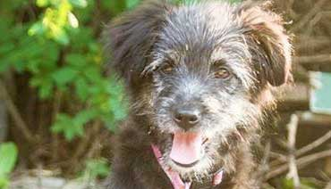 Earthdog Terrier Rescue of Manitoba